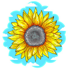 Beautiful sunflower on sky background vector illustration isolated on white background