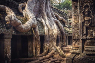 Cambodia travel icon banyan roots in Angkor wat temple Ta Prohm from Lara Croft