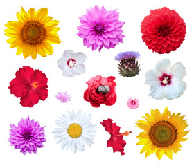 Flowers set isolated on white background