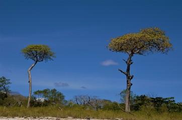 Playa Barrigona forest