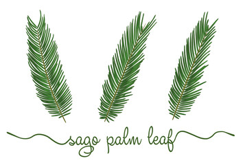 Leaves of sago palm elements set. Botany hand drawn graphic illustration. Collection of sagu foliage on a white background