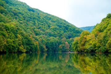 Forest lake Hamori-Hungary