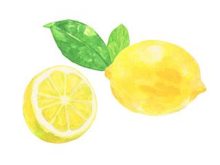 レモン 水彩