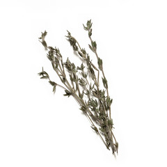 Bunch of fresh thyme - dried on the stem - isolated on white
