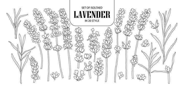 Set of isolated Lavender in 20 styles. Cute hand drawn flower vector illustration in black outline and white plane.