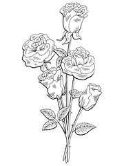 Rose flower graphic black white isolated bouquet sketch illustration vector