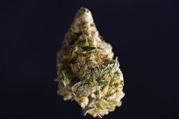 Single cannabis bud (black tuna strain) isolated on black background
