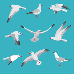 Atlantic seagull in different action poses. Cartoon flying birds
