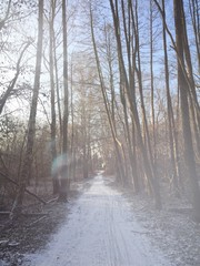 waldweg im winter 2