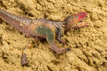 Carnotaurus on sand concept of historical animal excavating