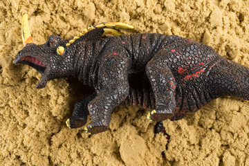 Triceratops on sand concept of historical animal excavating