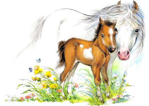 Horse and foal watercolor illustration