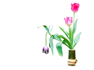 Wall Mural - fresh and dry tulip