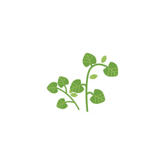 vector flat style hand drawn parsley branch with stem, leaves image. Isolated illustration on a white background. Spices , seasoning, flavorings and barbecue herbs concept.