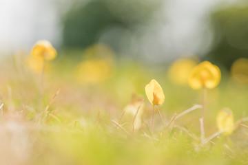 Closeup of beautiful yellow flowers