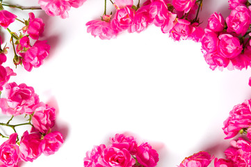 Pink roses on white background top view