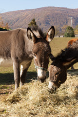 Animals in the enclosure of the farm, sunny day