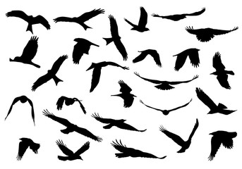 Set of realistic vector illustrations of silhouettes of flying birds of prey