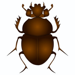 Egyptian Scarab beetle. Brown color object on white background vector