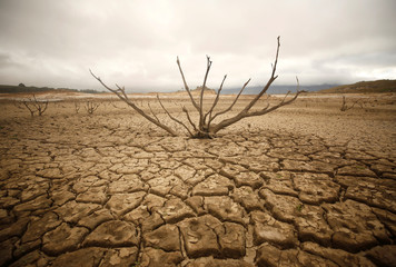 Dried-out branches are seen amongst caked mud at Theewaterskloof dam near Cape Town