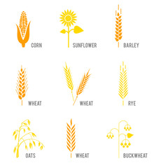 Cereal icons set with rice, wheat, corn, oats, rye, barley, sunflower, buckwheat.