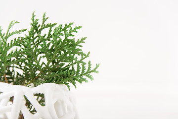 coniferous branch in a vase.minimalist style.close-up view