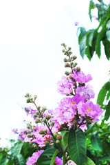 Natural background and flower pattern.