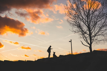 Man and dog together in sunset light, beautiful photo, man and friends