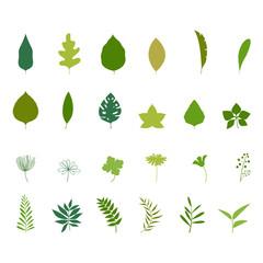 Set of tropical leaves. Palm leaf and banana leaf and jungle trees. Botanical illustration.