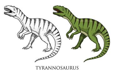 Dinosaurs Tyrannosaurus rex, Tarbosaurus, Struthiomimus skeletons, fossils. Prehistoric reptiles, Animal engraved Hand drawn vector.