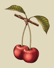 Cherry hand drawing vintage engraving illustration