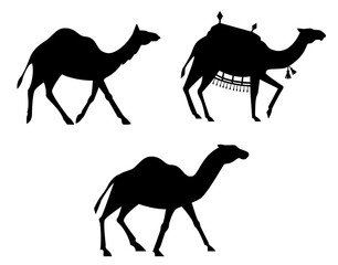 Silhouettes of camels.
