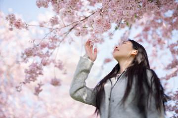 Junge Asiatin bewundert die Kirschblüte im Frühling