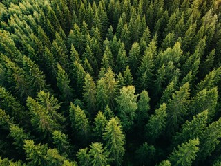 Photo sur Toile Foret Aerial top view of summer green trees in forest in rural Finland.