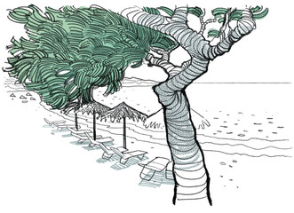 beach, tree and sea, graphic illustration