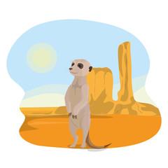 Meerkat in the desert
