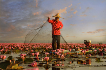 Thai fisherman trow the nets in flower lotus lake,  Thai people in Red Lotus lake, UdonThani Thailand Wall mural
