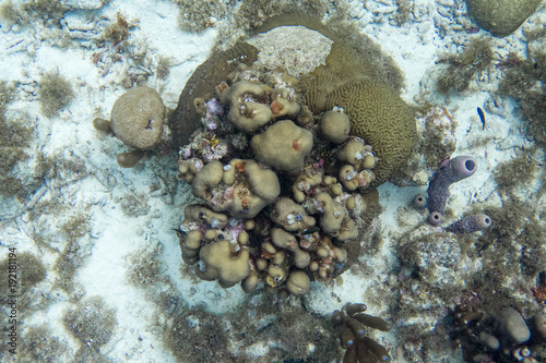 Underwater Scene With Coral Giant Brain Coral Branching Purple