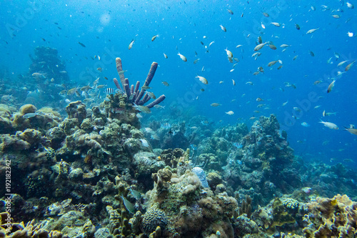 Coral Reef With A Multitude Of Fish And Purple Branching Vase Sponge