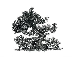 Денежное дерево.Рисунок от руки.