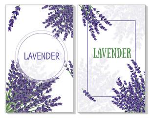 lavender bushes on white background, pattern for postcards and leaflets