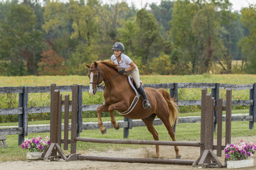 Equestrian jumps gelding over simple fence