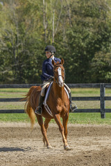 Equestrian looks for next fence on gelding