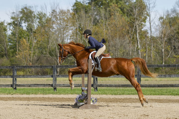 Equestrian Showing Warmbood Jumping - Side