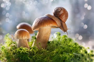 Белые грибы растут на зеленом лесном  мху.