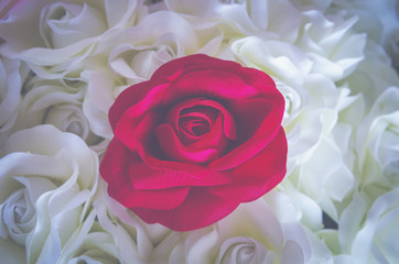 rose flower background for Valentine's Day, vintage filter image