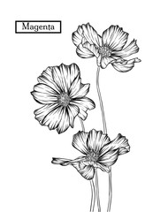 Hand drawn illustration and sketch  Magenta flower. Black and white with line art illustration.Idea for business visit card, typography vector,print for t-shirt.