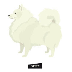 Dog collection Spitz Geometric style Isolated object