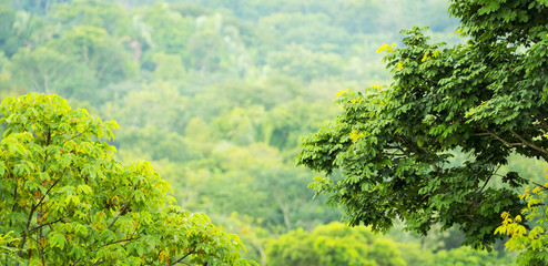 Green Jungle Views Mexico