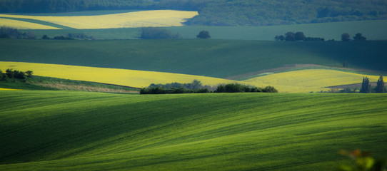Green and yellow spring field abstract background